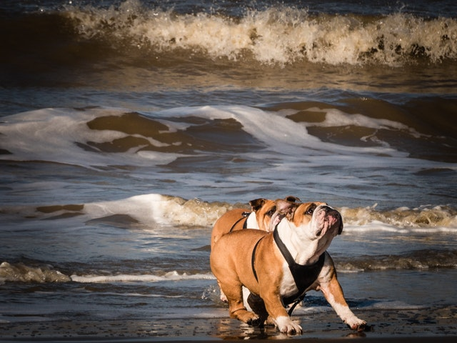 perros en la playa del apartamento en Barcelona