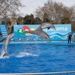 zoo_de_barcelona