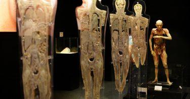 Exposición Human bodies