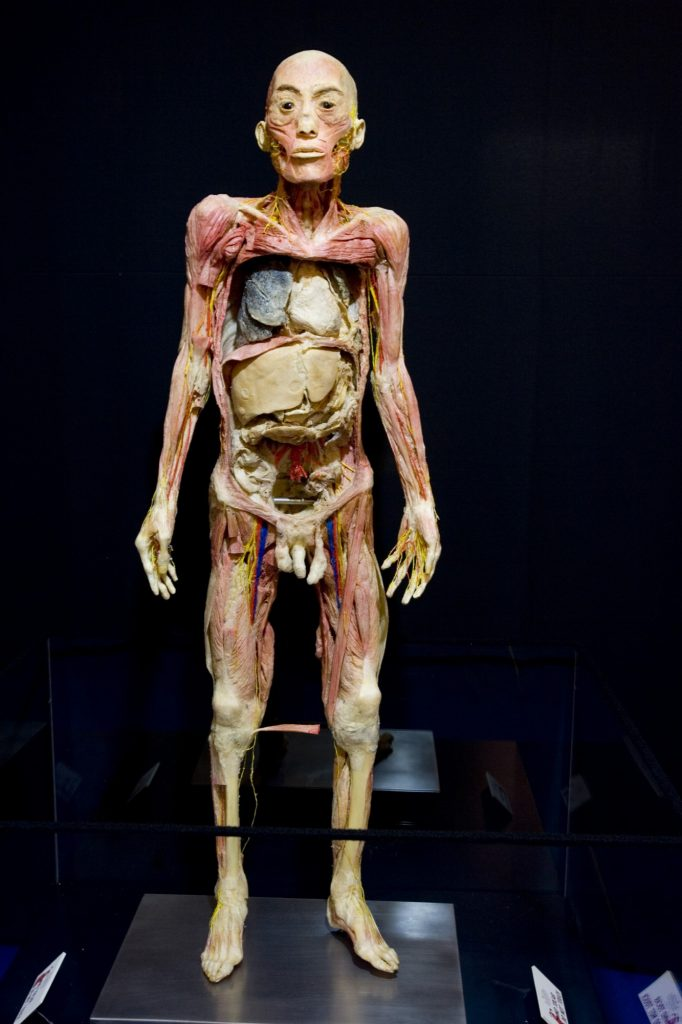 Cuerpo de la muestra de Human Bodies