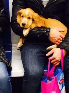 Un perro en el metro de Barcelona