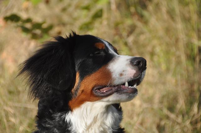 Perros, permitidos en muchos bares de BCN