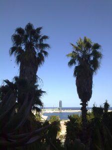 vista panoramica del puerto de barcelona a traves de dos palmeras