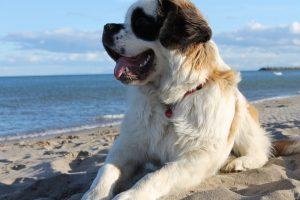 perros en las playas de Barcelona