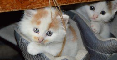 adoptar gatos barcelona