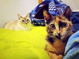 adiestrar gatos en barcelona, educar a un gato en barcelona