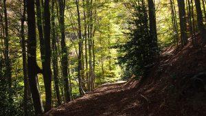 rutas por el Parque Natural del Montseny