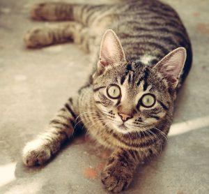 adoptar-gatos-barcelona2