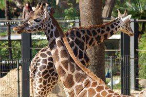 Ofertas zoo Barcelona