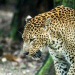 Aparcar gratis cerca del Zoo de Barcelona