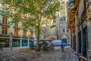 árbol en la plaza de la catedral de barcelona
