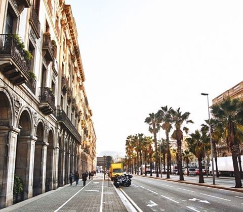 Barcelona  view friday weekend barriogotico picoftheday palmtrees amazingcity cityhellip