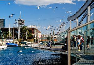 imagen del puerto con gaviotas volando