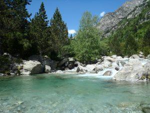 agua en un lado rodeado de pinos y montañas