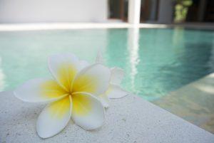 flor blanca y amarilla en un balneario
