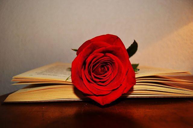 Imagen de una rosa y un libro