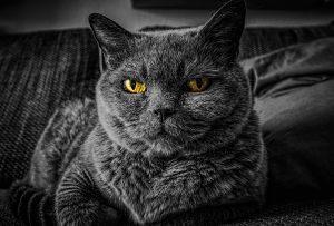 Imagen de un gato gris