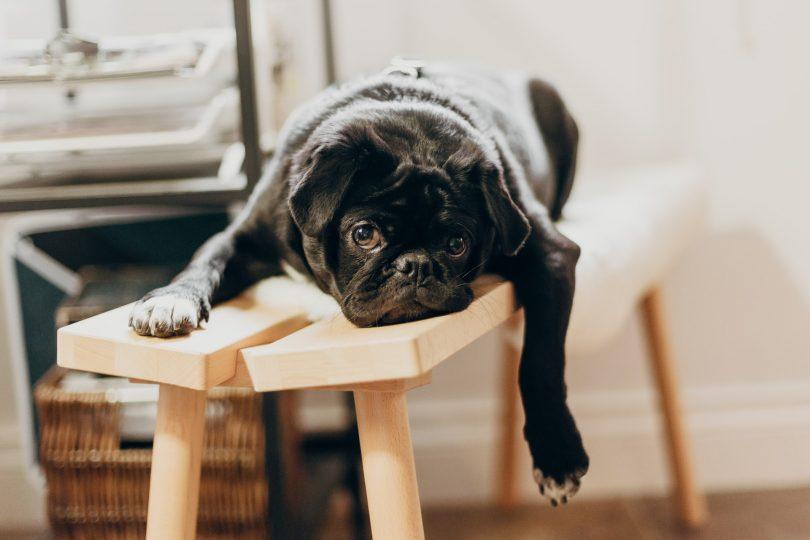 alquilar un piso con mascotas