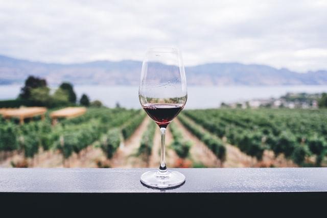 Copa de vino tinto con viñedos de fondo