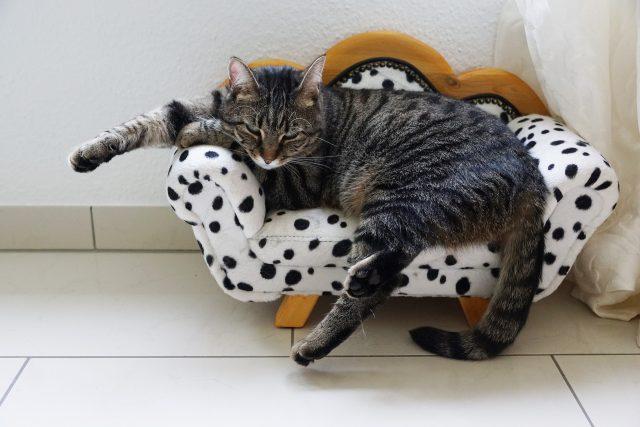 sofá blanco y negro cómodo con gato preparado para ver una maratón de series