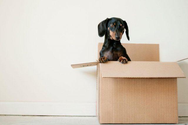 Mudança para alugar um apartamento
